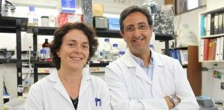 M.ª Ángeles García Esparza y José Miguel Soria, profesores de la CEU-UCH miembros del equipo investigador.