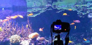 Las imágenes han sido tomadas en el acuario que el Oceanogràfic de Valencia dedicado al mar Caribe.