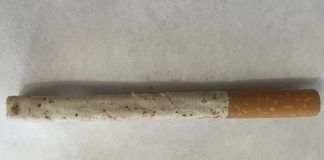 Aspecto del tabaco rubio tras más de 12 meses en humidor, durante las pruebas de conservación realizadas por los investigadores del CEU-UCH.