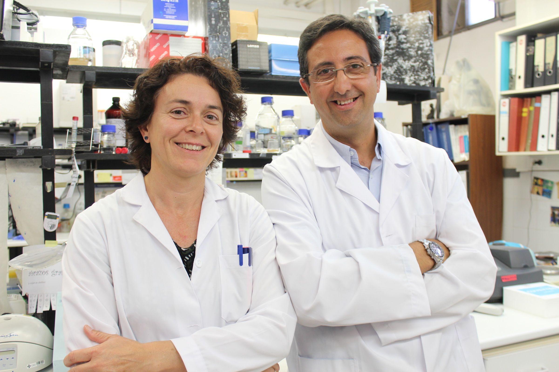 Los profesores de la CEU UCH de Elche y Valencia María Ángeles García Esparza y José Miguel Soria, autores de la investigación sobre los efectos de la Ocratoxina A, en colaboración con investigadores del CIPF y la UV.