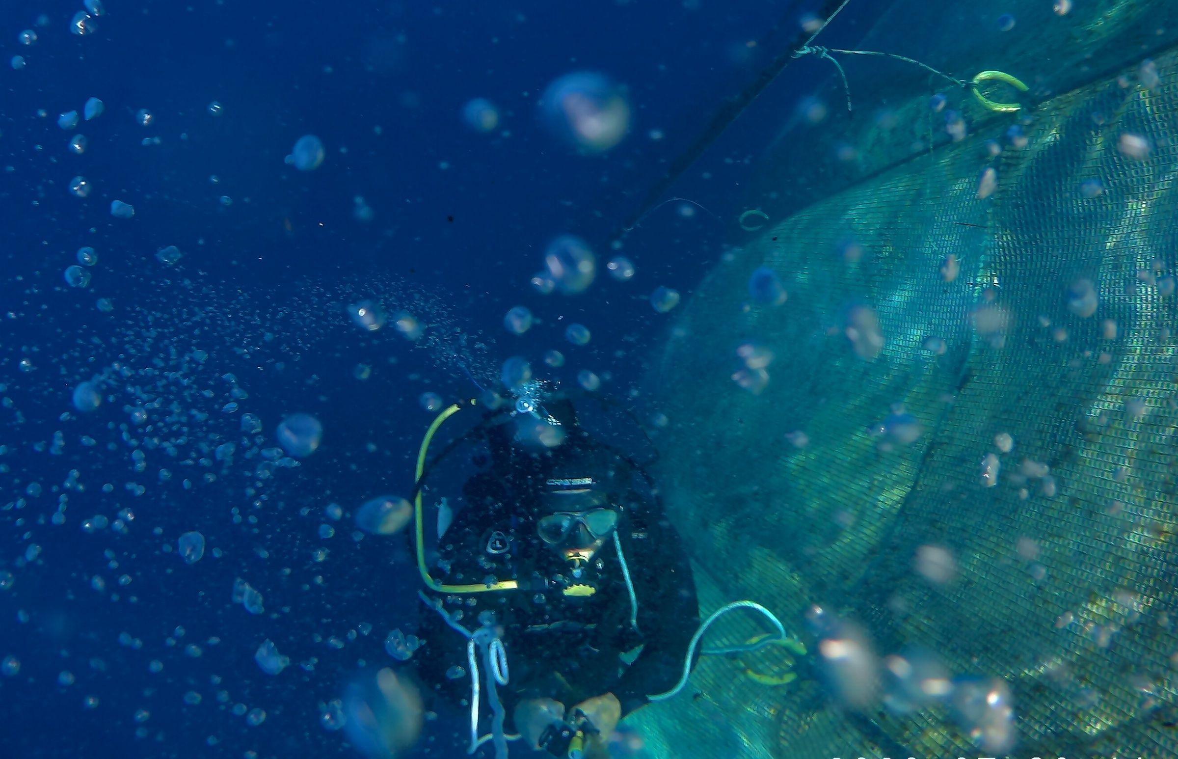 El fototrampeo permite la captación de imágenes subacuáticas al equipo de la CEU UCH para el estudio de peces salvajes en torno a granjas acuícolas de Canarias y la Comunidad Valenciana, en el proyecto Parapez 3.