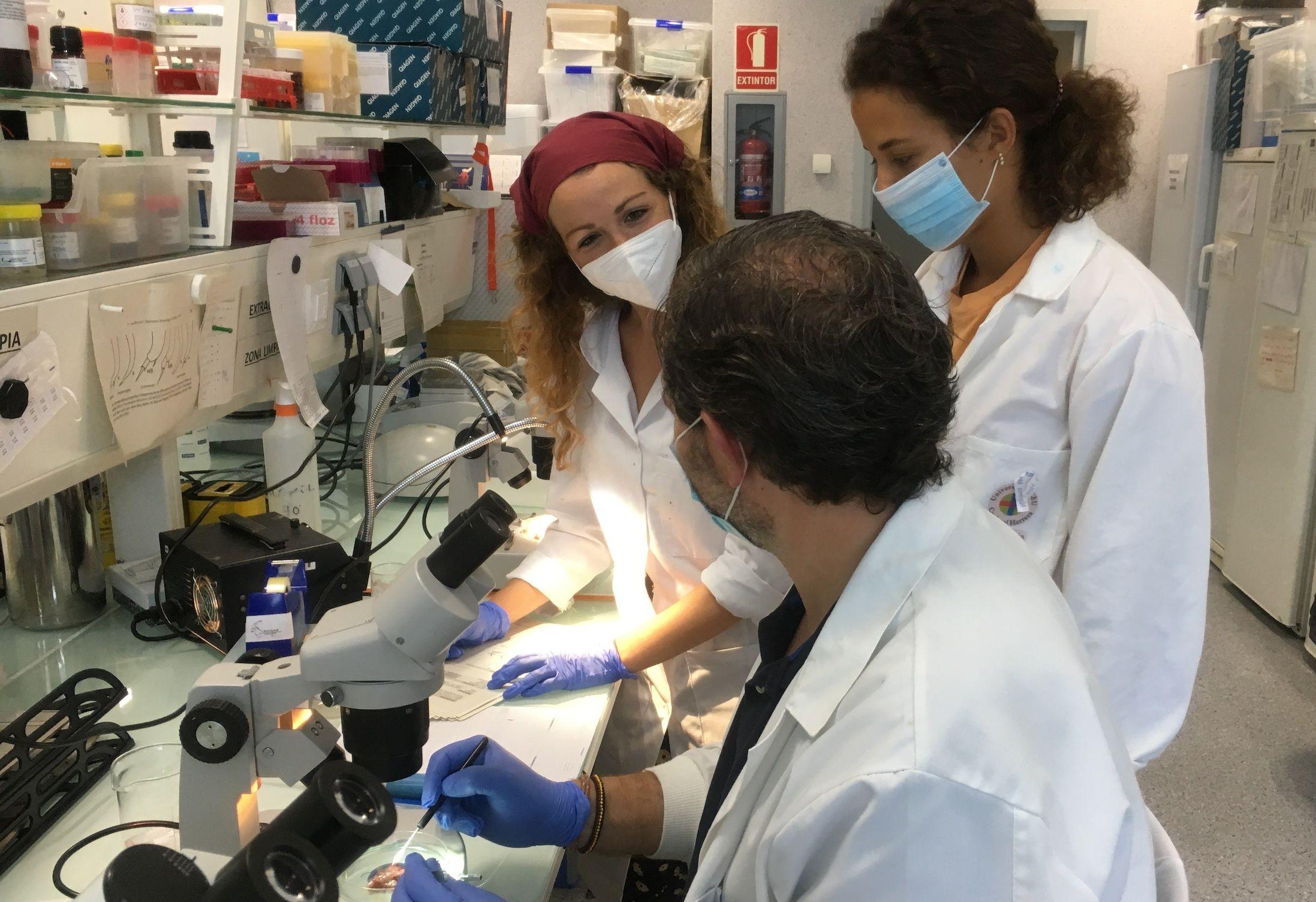 Tras la toma de muestras, en el proyecto Parapez el equipo de veterinarios de la CEU UCH analiza las especies parasitarias en peces salvajes y cultivados.
